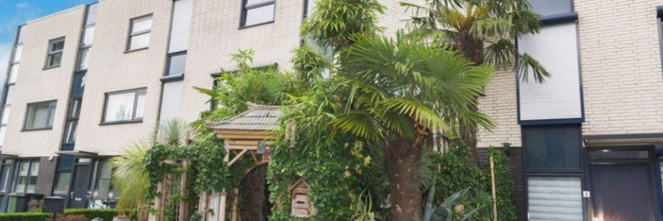 te koop in roosendaal huis met jungle